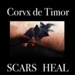 """Corvx de Timor, """"Scars Heal"""""""