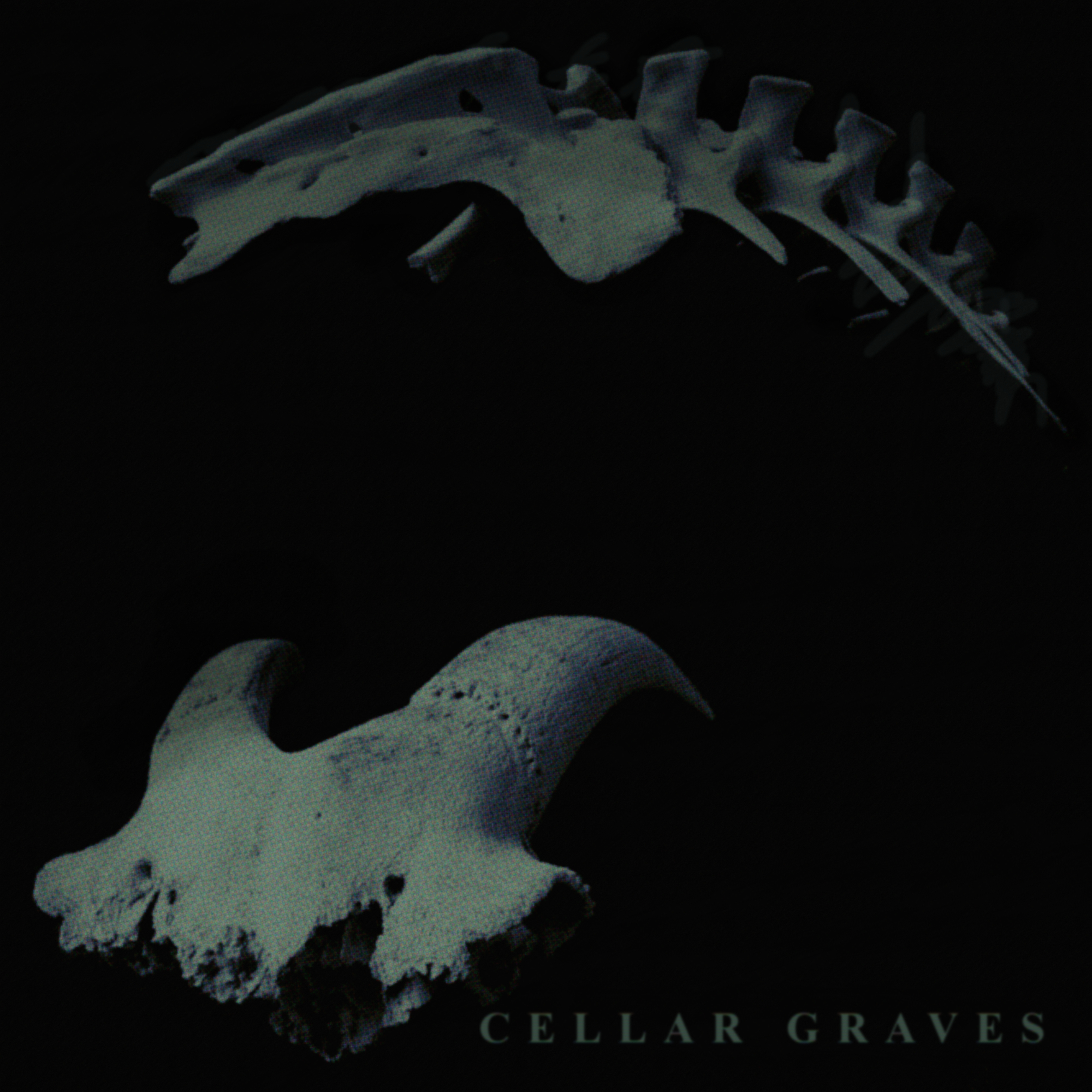 Observer: Cellar Graves & Razorback Hollow