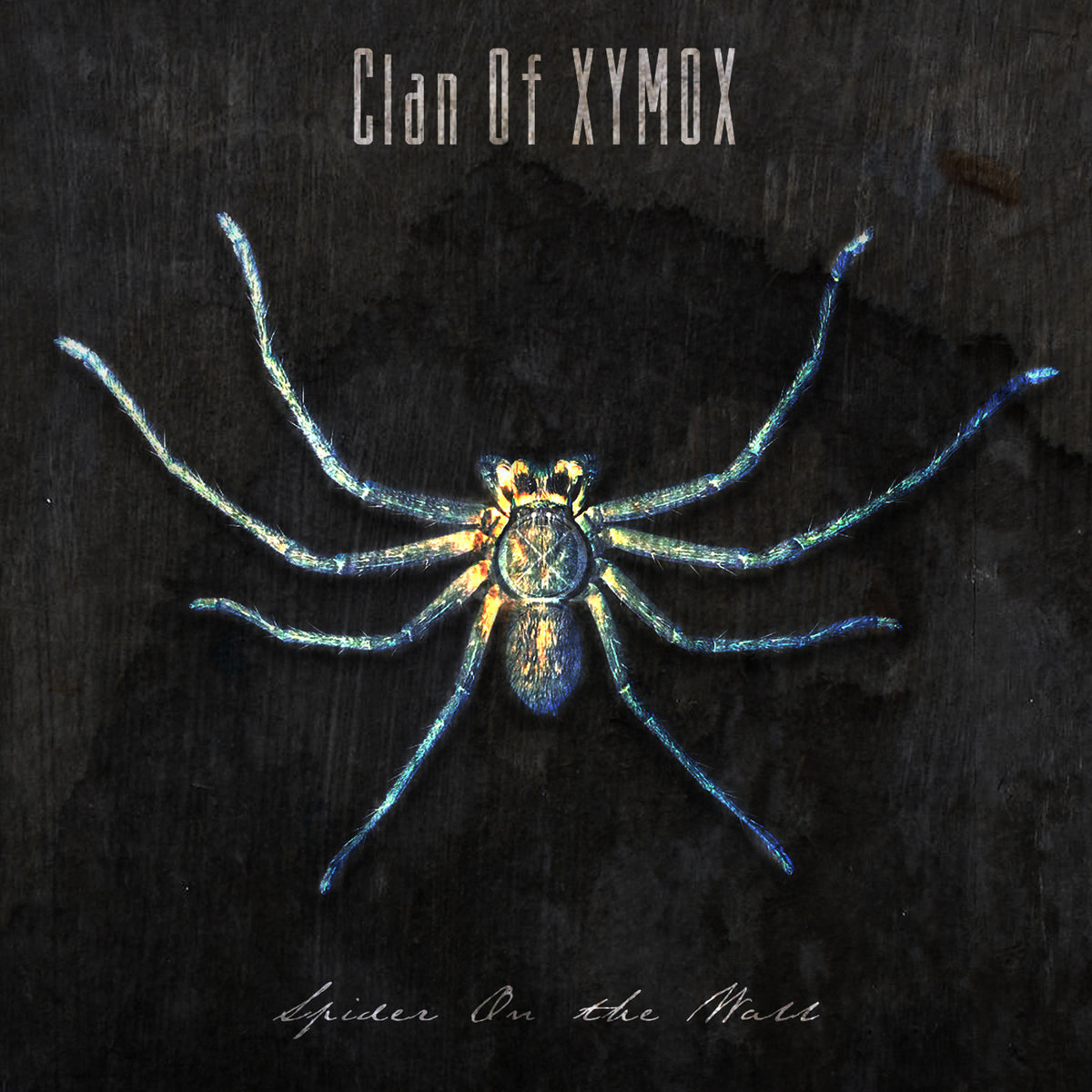 "Clan of Xymox, ""Spider on the Wall"""